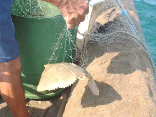Télécharger le jouet sur la pêche
